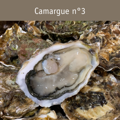 Camargue n°3 - sur plateau*