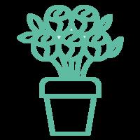 Image de la categorie Fleurs & Plantes de Commerçants L'Islois