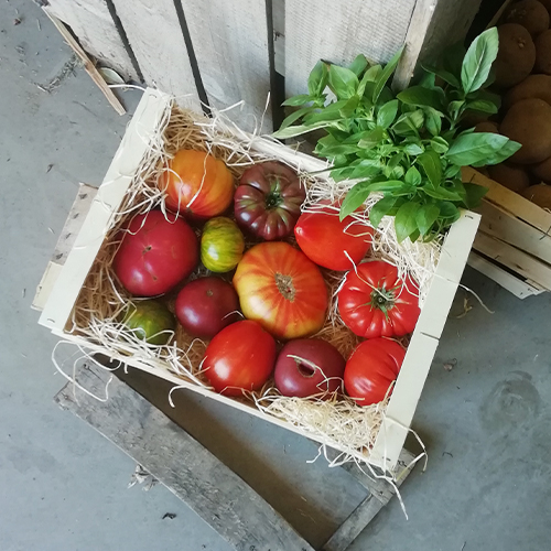 Panier 3.5 kg de Tomates anciennes