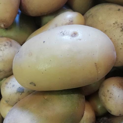 Petites pommes de terre nouvelles (conv BIO)