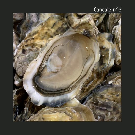 Cancale n°3 - La douzaine - Huîtres vrac