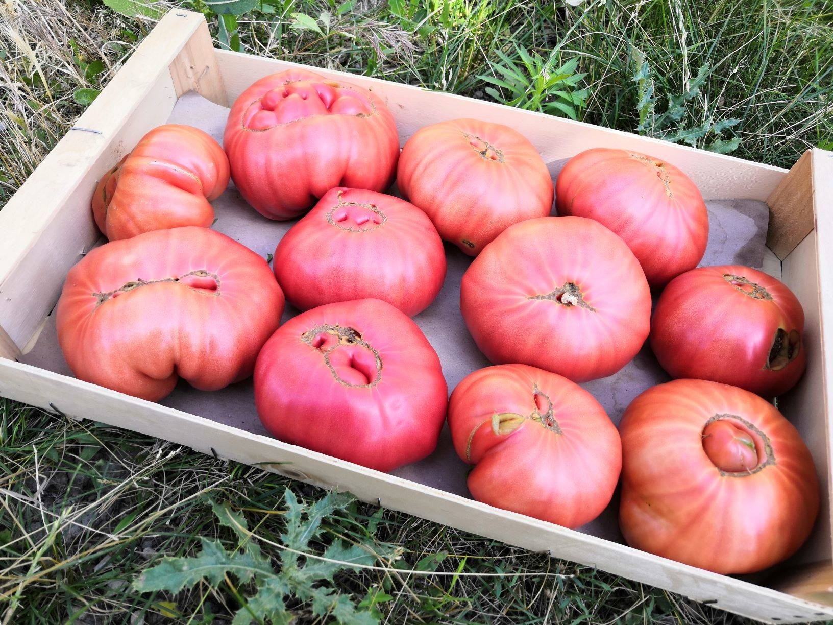 Tomates anciennes ( 1kg)
